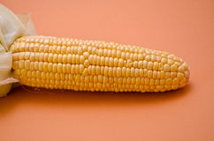 Corn. Fresh corn in the foreground on colored background Royalty Free Stock Photo