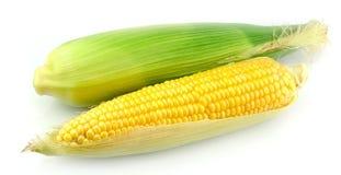 Fresh corn fruits Stock Photography