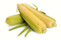 Fresh corn fruits Stock Photo
