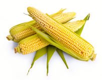 Fresh corn fruits Stock Photos