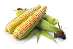 Fresh corn fruits with green leaves Royalty Free Stock Photo