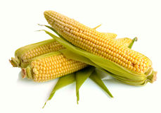 Fresh corn fruits Stock Photo
