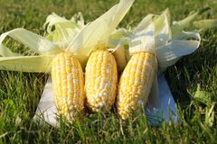 Fresh corn on the grass Royalty Free Stock Images