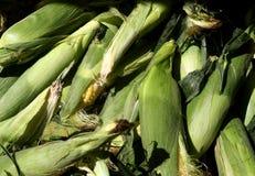 Fresh corn in green husks. A pile of fresh sweet corn covered in green husks Stock Image