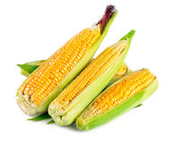 Fresh corn with green leaf Stock Photography