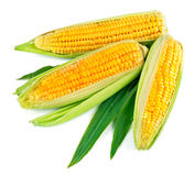 Fresh corn with green leaf Stock Image