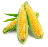 Fresh corn with green leaf. On white Royalty Free Stock Image