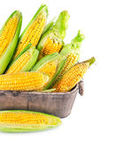Fresh corn with green leaf in wooden basket Stock Photography