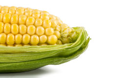 Fresh corn with green leaves Stock Photography