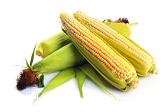 Fresh corn with green leaves still life vegetables. Stock Photo