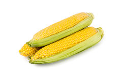 Fresh corn with green leaves Royalty Free Stock Photo