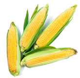 Fresh corn harvest vegetables top view green Stock Photography