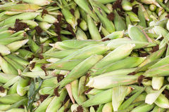 Fresh corn with husk Stock Photo