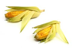 Fresh corn isoalted on white Royalty Free Stock Photo