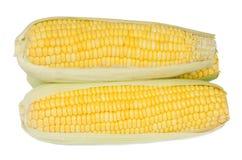 Fresh corn. Stock Images