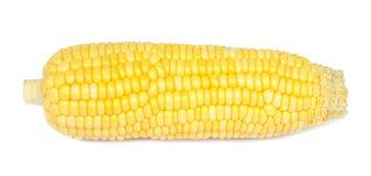 Fresh corn. Royalty Free Stock Images