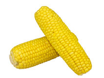 Fresh Corn isolated on a white background Royalty Free Stock Photography