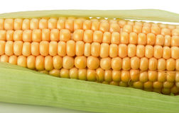 Fresh corn isolated on the white background Royalty Free Stock Photography