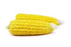 Fresh corn Stock Photos