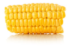 Fresh corn isolated on the white background Stock Photos