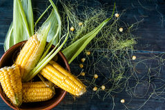 Fresh corn with leaves Royalty Free Stock Photography