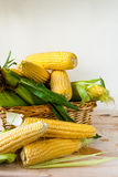 Fresh corn with leaves Stock Image