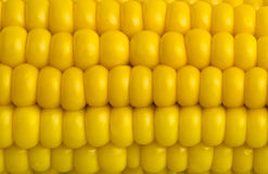 Fresh corn macro Royalty Free Stock Photos