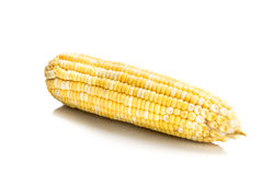 Fresh corn maize cob with kernel seeds without husk Royalty Free Stock Photo
