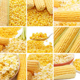 Fresh corn, preserved corn and popcorn Royalty Free Stock Photography