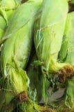 Fresh Corn Produce Stock Photo