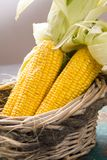 Fresh corn on rustic wooden table, closeup Royalty Free Stock Image