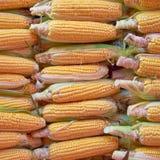 Fresh corn for sale Stock Photo