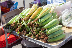Fresh corn for sale at the farmers market Royalty Free Stock Images