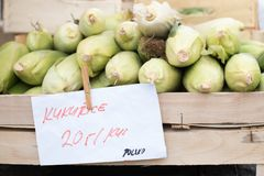 Fresh corn in a wooden box in the farmers market royalty free stock photos