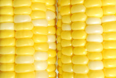 Fresh corn surface Royalty Free Stock Images