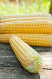 Fresh corn  on the table Stock Photo