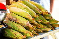 Fresh corn with their husks on lined Royalty Free Stock Image