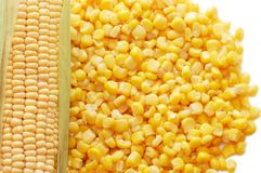 Fresh corn and tinned corn Stock Image