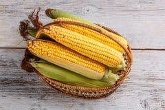 Fresh corn. Top view of fresh raw corn cob in basket Stock Image
