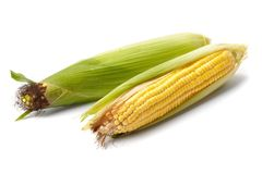 Fresh corn vegetable Stock Images