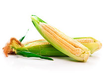 Fresh corn vegetable Royalty Free Stock Photography