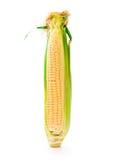 Fresh corn vegetable Royalty Free Stock Photos