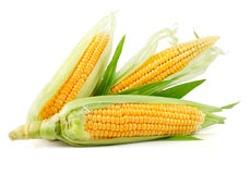 Fresh corn vegetable with green leaves stock images