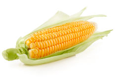 Fresh corn vegetable with green leaves royalty free stock images