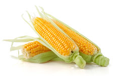 Fresh corn vegetable with green leaves Stock Photos