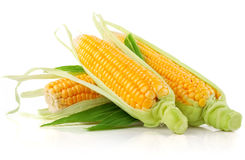 Fresh corn vegetable with green leaves royalty free stock photography