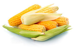 Fresh corn vegetable with green leaves isolated Royalty Free Stock Photos