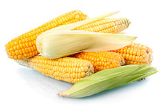 Fresh corn vegetable with green leaves isolated Stock Photos
