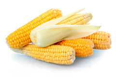 Fresh corn vegetable with leaves isolated Royalty Free Stock Photos