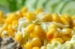 Fresh corn with vegetable salad. Close up of fresh corn with vegetable salad Royalty Free Stock Image